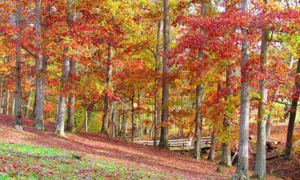 Trees with colorful leaves in fall in Pulaski County