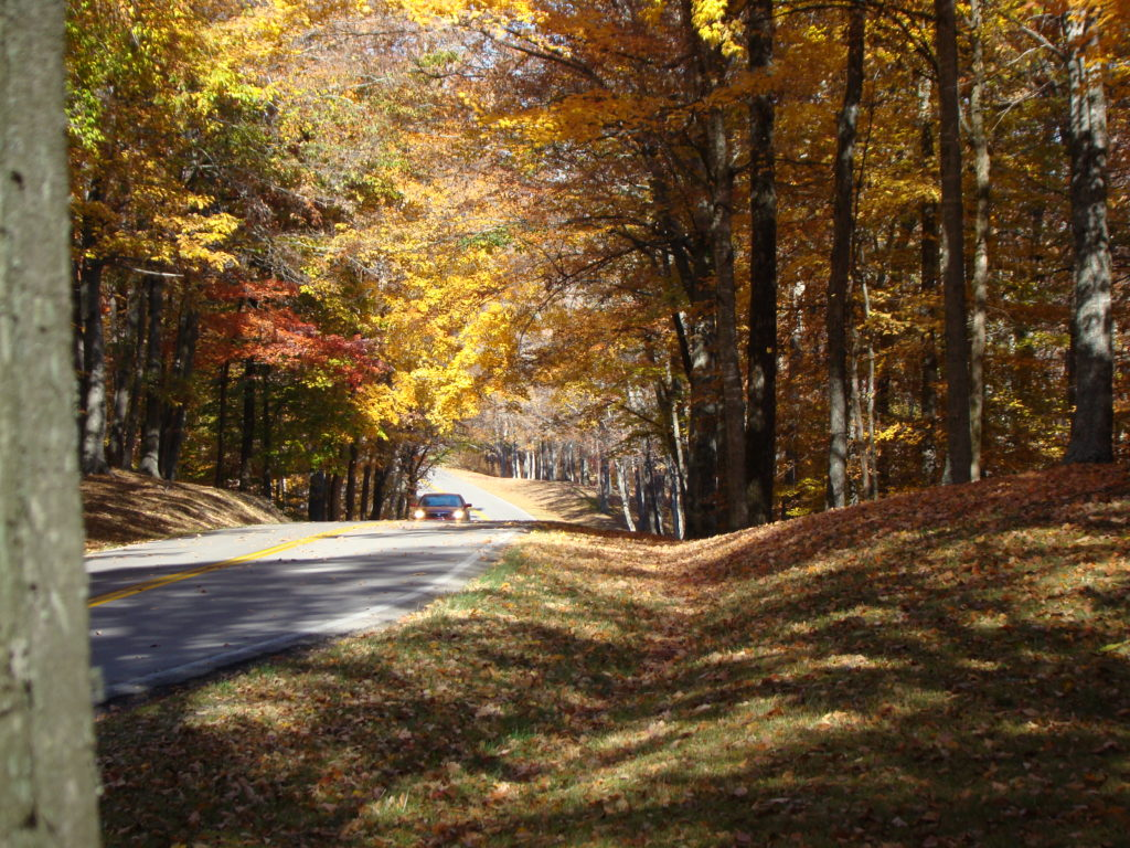 Car driving down road surrounded by trees with fall colored leaves